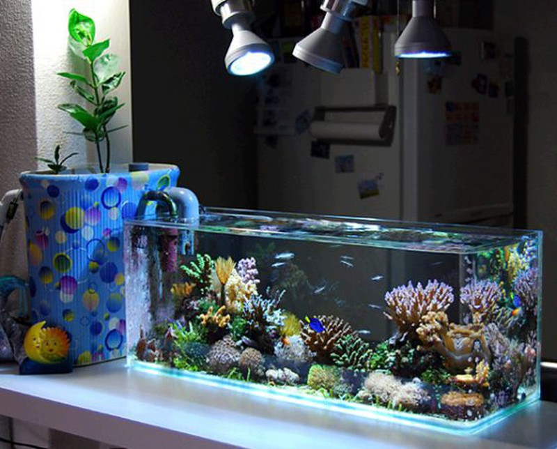 bể cá tân cổ điển
